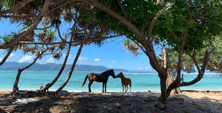 ギリ・トラワンガン島のビーチと馬